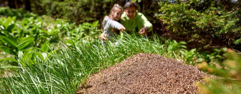 Hotelangebot - Grüne Ferien - Wir bringen die Natur und das gesunde ...