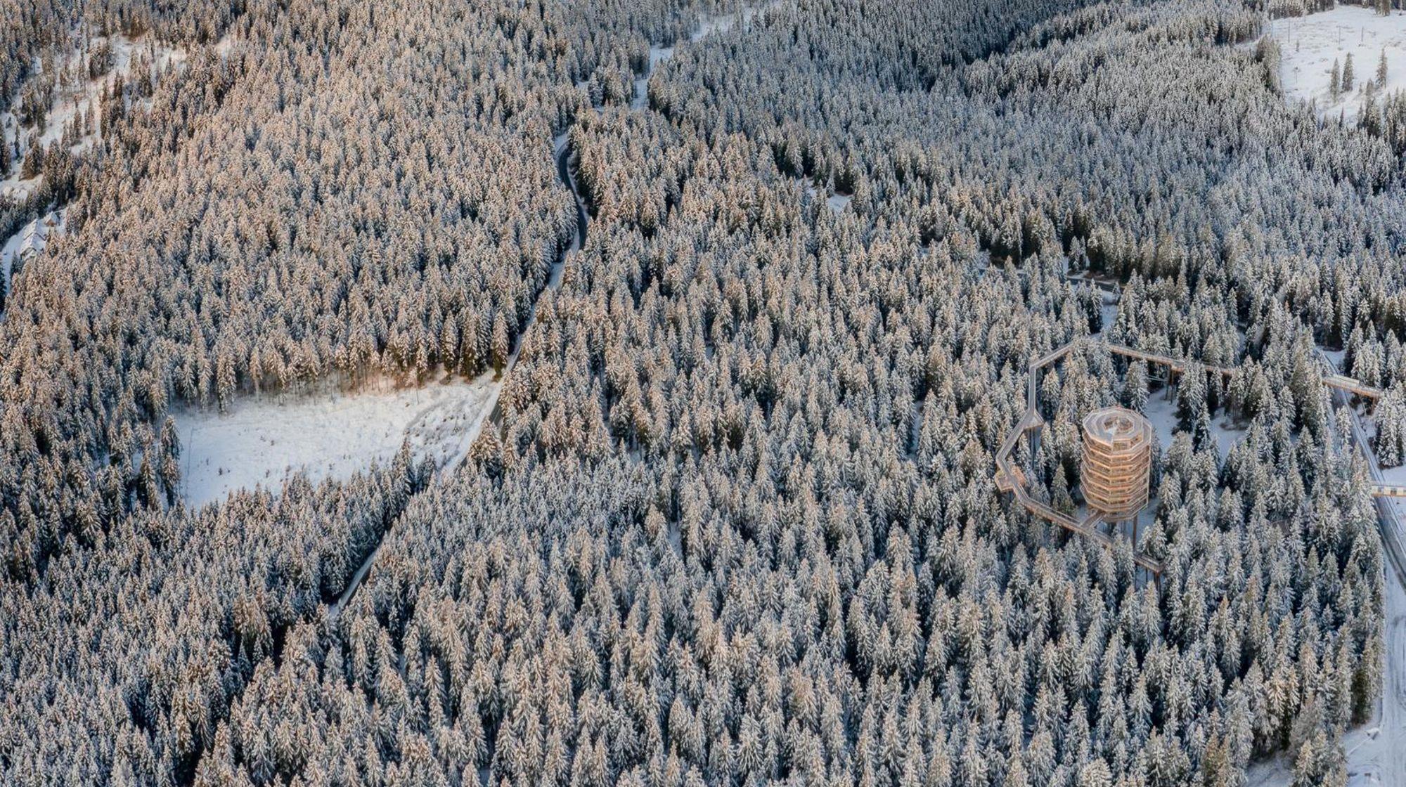 Pot med krošnjami Pohorje na Rogli